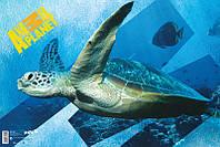 Подкладка настольная (60х40 см) KITE 2015 Animal Planet 212