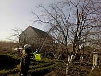 Защита деревьев. Защита плодовых деревьев икустарников.