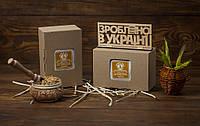 Пророщеные зерна овса, пшеницы, ячменя, кукурузы в коробке