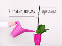 9 правил для полива орхидей