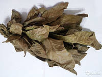 Орех грецкий листья 50 г. НФ
