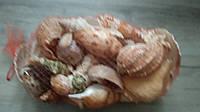 Ракушки из Индийского океана