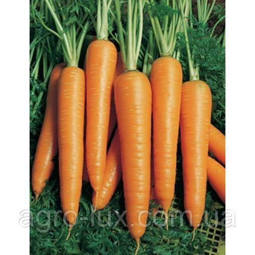 Семена морковь Вита Лонга 50 грамм Bejo / БЕЙО