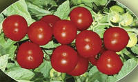 Семена томата Лартино F1  500 сем. Agri.