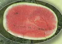 Семена арбуза AGX 17-06 F1 1000 сем. Agri.
