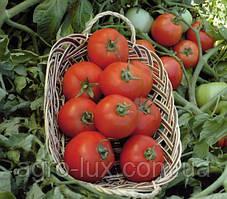 Семена томата Полбиг F1 5 грамм Bejo / БЕЙО