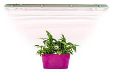 Светодиодный светильник для растений (IP 65, красно-синий 5/1, 36 Вт, 120 см)