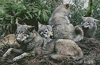 """Схема для вышивания """" Закон волчьей стаи """""""