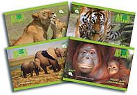 Альбом для рисования (12 листов) KITE 2016 Animal Planet 241