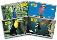 Альбом для рисования (24 листов) KITE 2016 Animal Planet 242