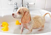 Шампуни для собак и щенков
