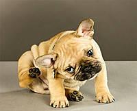 Уход за ушами собак