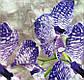 Наволочка 70х70 Орхидея, фото 3