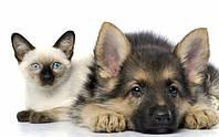 Профессиональная дрессировка молодых собак и воспитание щенков