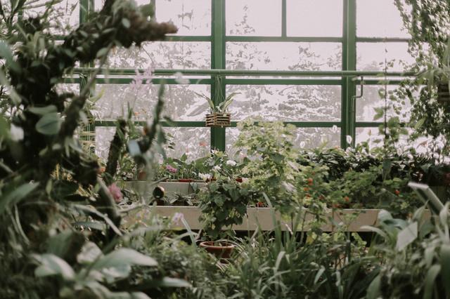 теплиця, ботанічний сад