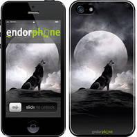 "Чехол на iPhone 5 Воющий волк ""934c-18"""