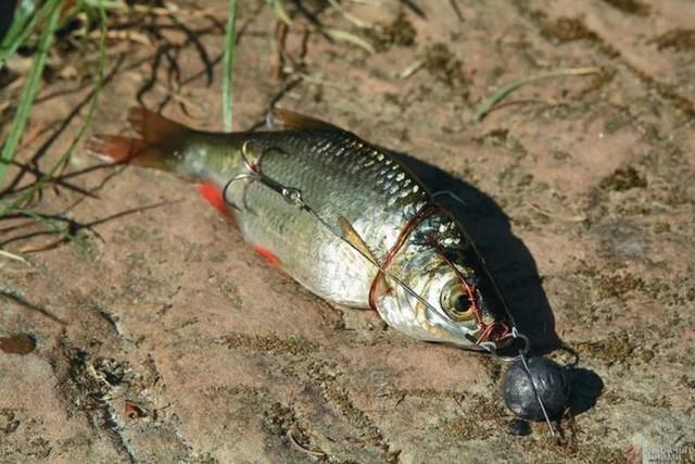 Снасточка с мертвой рыбкой