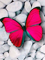 Алмазная вышивка Нежная бабочка-атлас 30 х 40 см (арт. FR460)