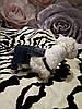 Комбинезон джинсовый для собаки. Одежда для собак, фото 4