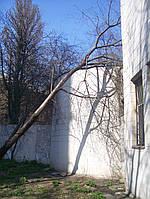 Срезка аварийных деревьев Уборка опасных деревьев