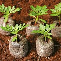 Торфяные таблетки (таблетки джиффи диаметр 33 мм) - высев семян для получения укоренившейся рассады