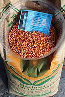 Кукуруза кормовая Любава 279 МВ гибрид кукурузы на зерно и силос, засухоустойчивая и холодостойкая