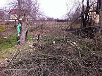 Расчистка участка,спил,корчевание деревьев Киев.