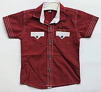 Рубашка 1-2 года с коротким рукавом