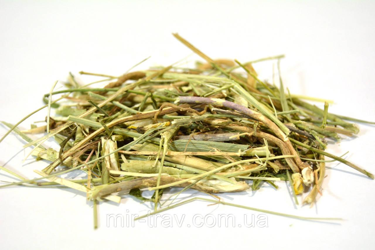 Льнянка обыкновенная трава