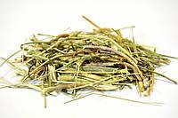 Льнянка обыкновенная трава, фото 1