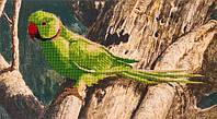 Набор для вышивания бисером  Попугай