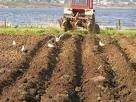 Продажа земельного участка сельхозназначения