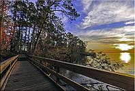 Светящиеся картины Startonight Деревянный Мост Природа Пейзаж Печать на Холсте Декор стен Дизайн дома Интерьер