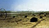 1980 Получен заказ на оросительные системы (Шаркия, Египет) для работы над пустынном озеленении.