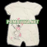 Детский песочник-футболка р. 74 ткань КУЛИР-ПИНЬЕ 100% тонкий хлопок ТМ Baby A 3498 Бежевый