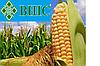 Семена кукурузы ВН 63 (ВНИИС)