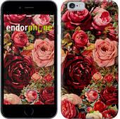 """Чехол на iPhone 6 Цветущие розы """"2701c-45"""""""