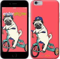 """Чехол на iPhone 6 Мопс на велосипеде """"3072c-45"""""""