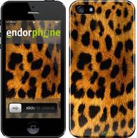 """Чехол на iPhone 5 Шкура леопарда """"238c-18"""""""