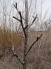 """Вешалка кованая, стилизованная под """"дерево"""""""