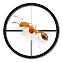 Уничтожение муравьёв