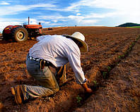 Як пораються з сільськогосподарською роботою на Житомирщині