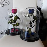 Роза в стеклянном колпаке, не вянет 3-5 лет. Одесса и вся Украина!