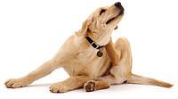 Как защитить собаку от клещей