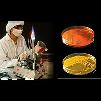 Исследование бактериологическое кала на дисбактериоз с определением чувствительности к антибиотиков