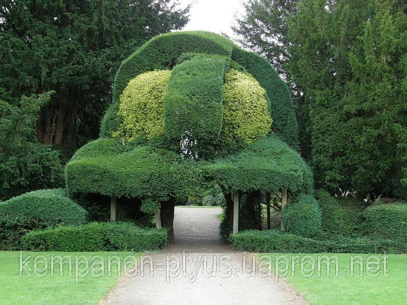 Стрижка декоративных кустарников