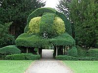 Стрижка декоративных кустарников, фото 1