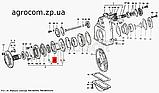 Кольцо нажимное диафрагма заднего моста Т-40, Д-144, фото 2