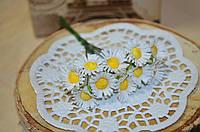 Цветы Ромашки (цена за букет из 10 шт). Цвет - белый
