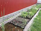 Поставки водных растений на обьект, фото 2